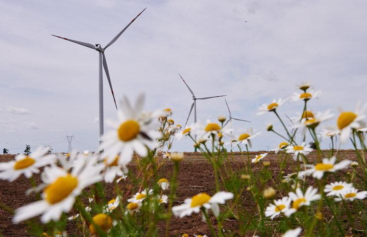 Farma wiatrowa na Żuławach